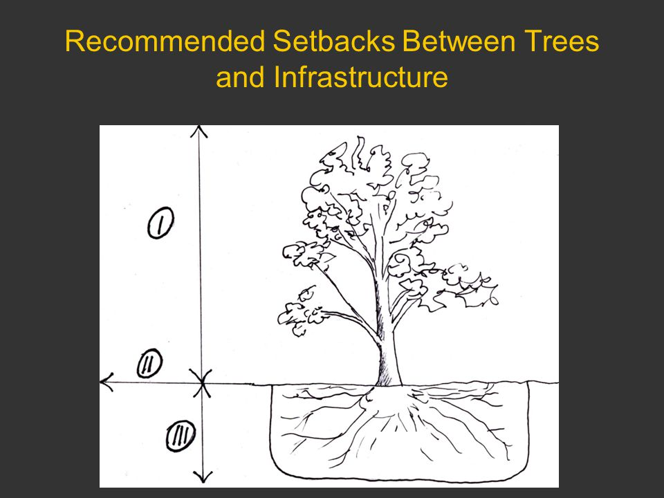 Recommended Setbacks Between Trees and Infrastructure