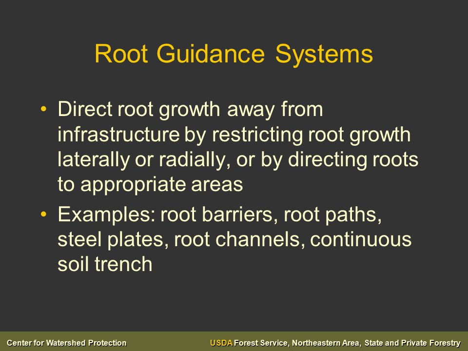 Center for Watershed Protection USDA Forest Service, Northeastern Area, State and Private Forestry Root Guidance Systems Direct root growth away from infrastructure by restricting root growth laterally or radially, or by directing roots to appropriate areas Examples: root barriers, root paths, steel plates, root channels, continuous soil trench