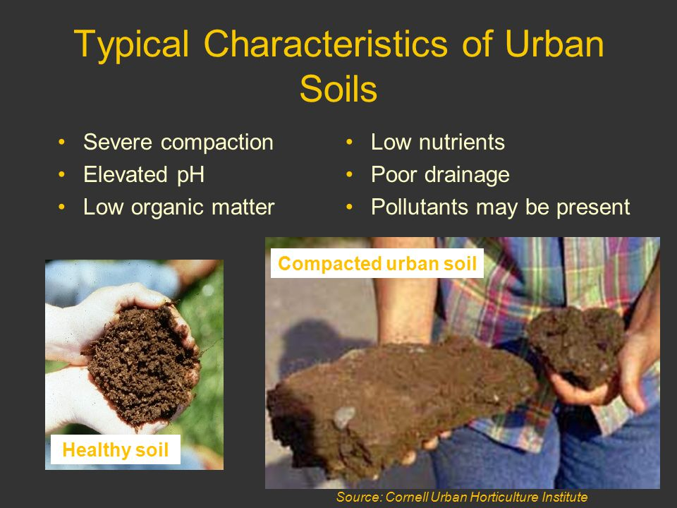 Source: Cornell Urban Horticulture Institute Typical Characteristics of Urban Soils Severe compaction Elevated pH Low organic matter Low nutrients Poor drainage Pollutants may be present Healthy soil Compacted urban soil