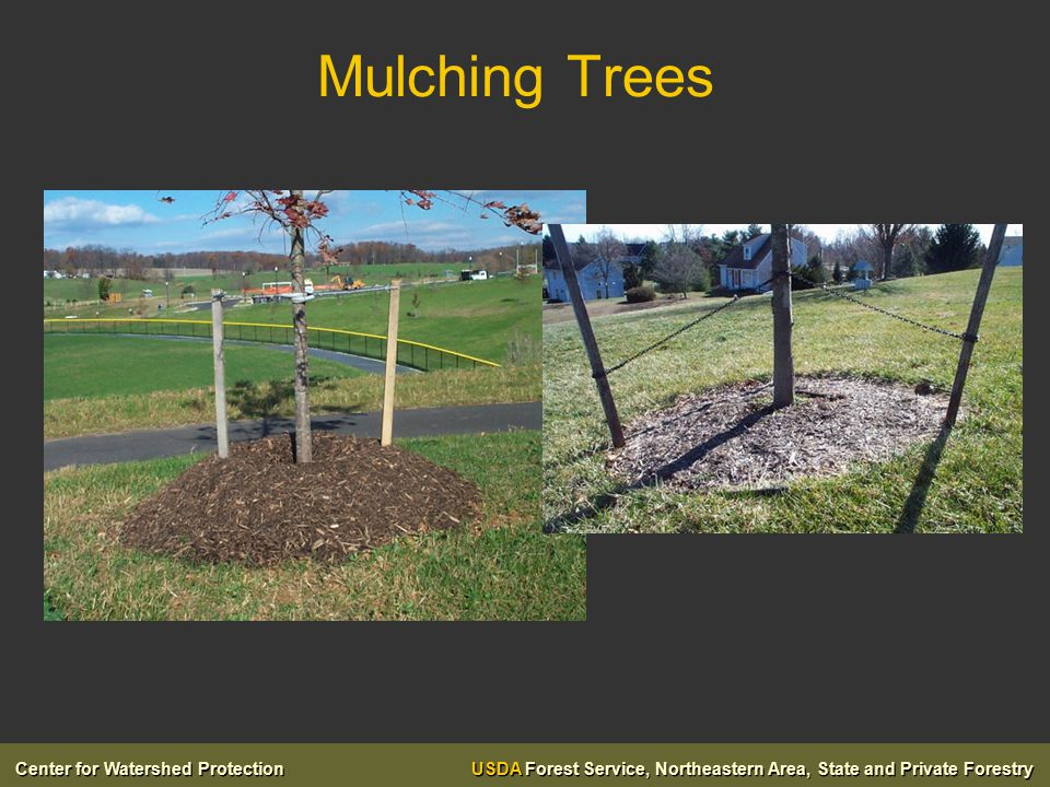 Center for Watershed Protection USDA Forest Service, Northeastern Area, State and Private Forestry Mulching Trees