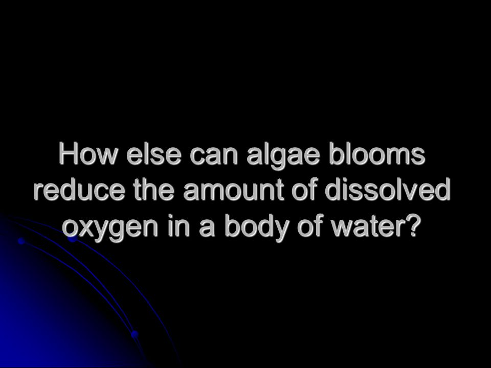 How else can algae blooms reduce the amount of dissolved oxygen in a body of water?