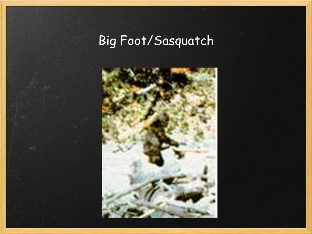 Big Foot/Sasquatch