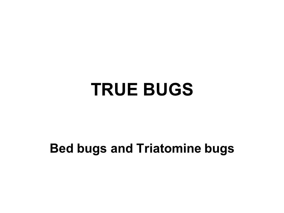 TRUE BUGS Bed bugs and Triatomine bugs