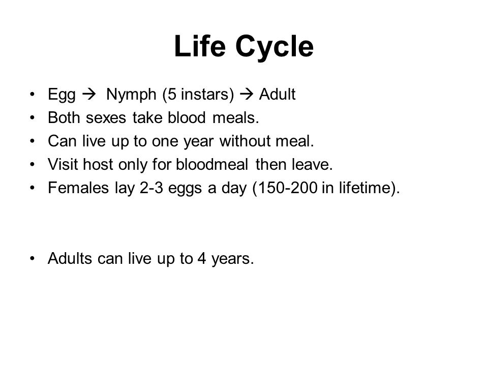 Life Cycle Egg  Nymph (5 instars)  Adult Both sexes take blood meals.