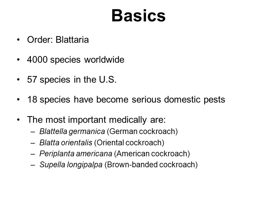 Basics Order: Blattaria 4000 species worldwide 57 species in the U.S.