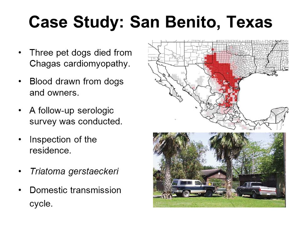 Case Study: San Benito, Texas Three pet dogs died from Chagas cardiomyopathy.