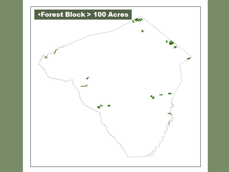 Forest Block > 100 Acres