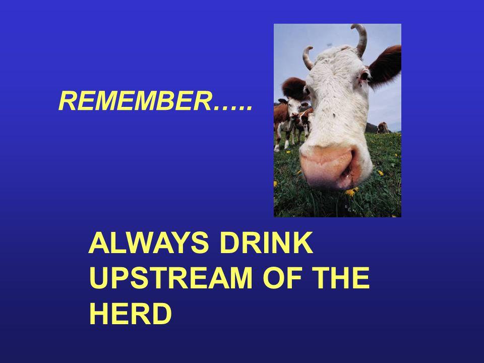 REMEMBER….. ALWAYS DRINK UPSTREAM OF THE HERD