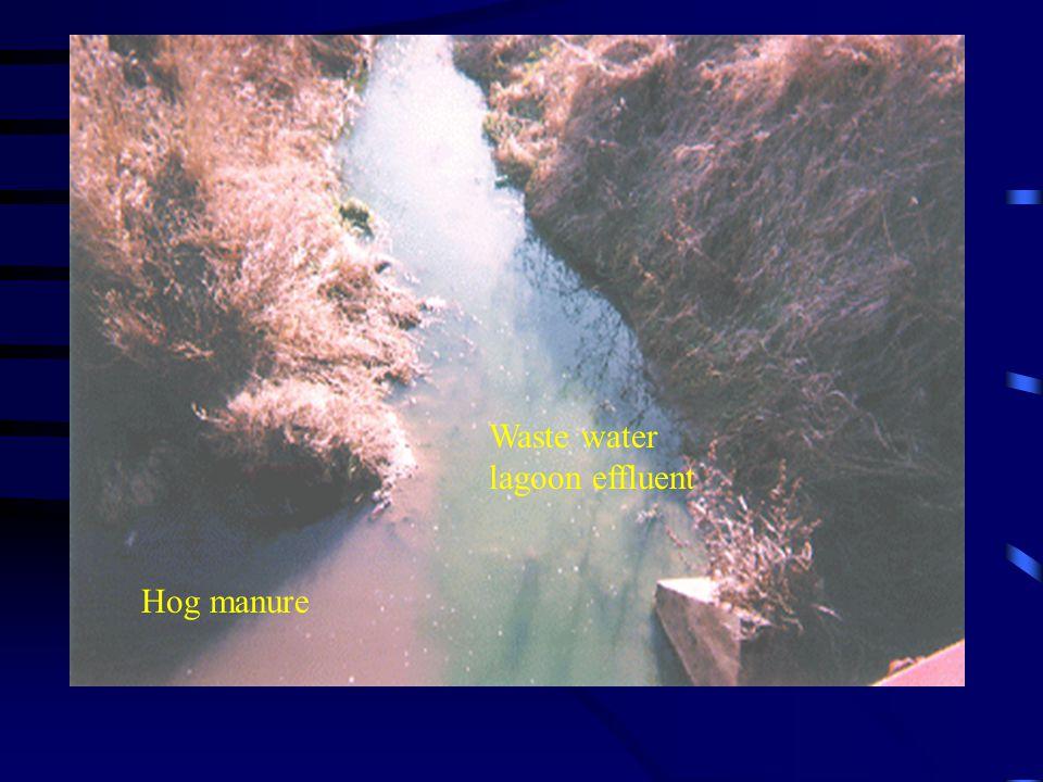 Hog manure Waste water lagoon effluent