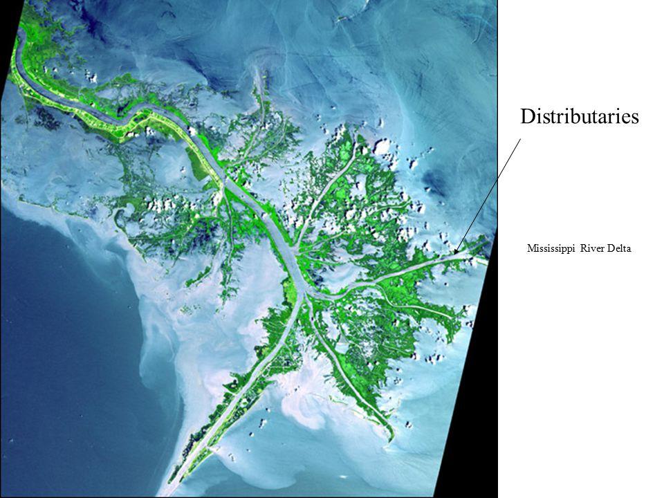 Mississippi Distributaries Mississippi River Delta
