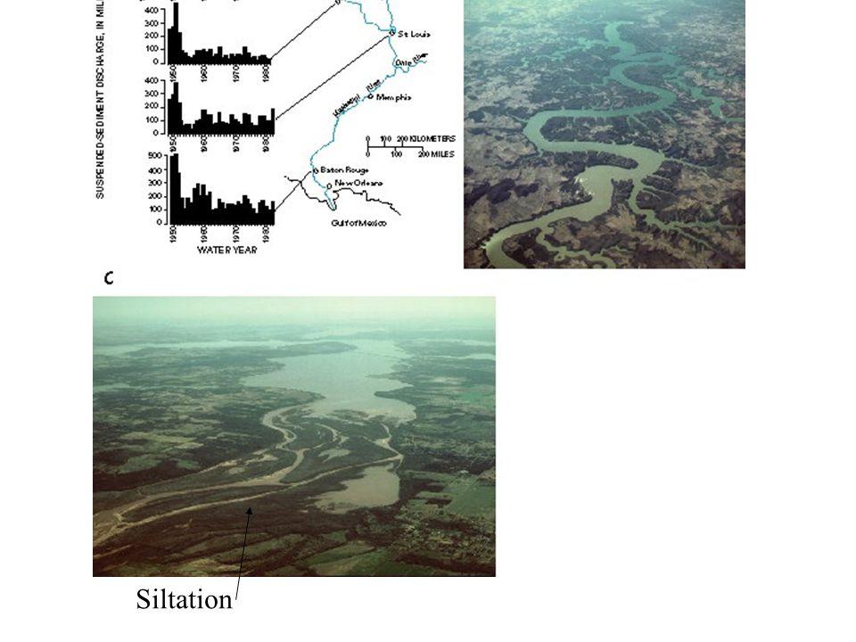 Dams Siltation