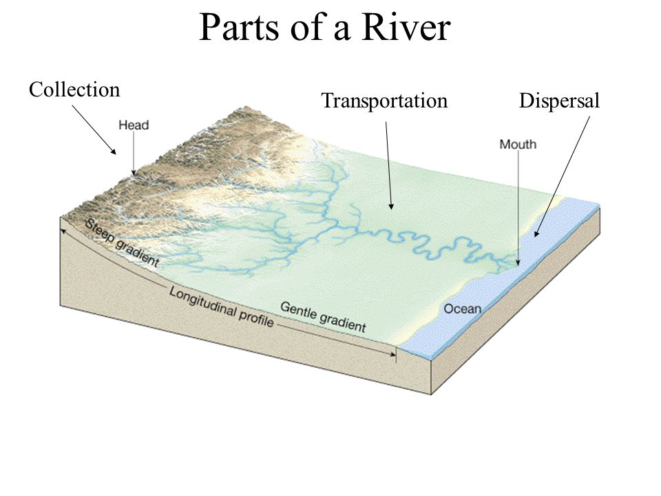 Parts of a River Collection TransportationDispersal