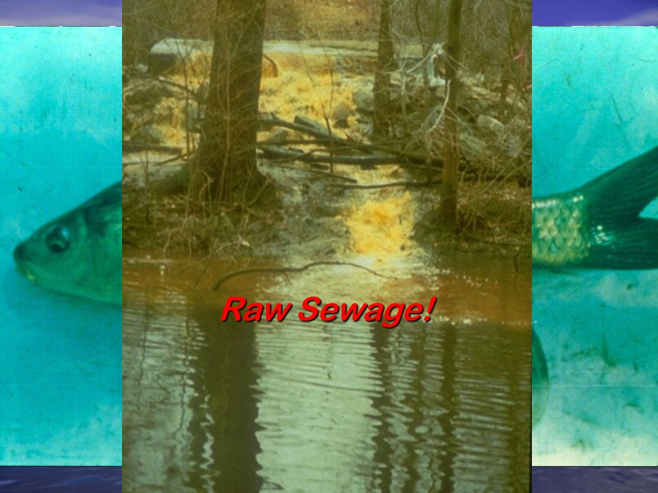 """""""Our beautiful city is almost encircled by the mouths of sewers discharging their contents … the sewer gases… absolutely dangerous to breathe…."""" """"…a s"""