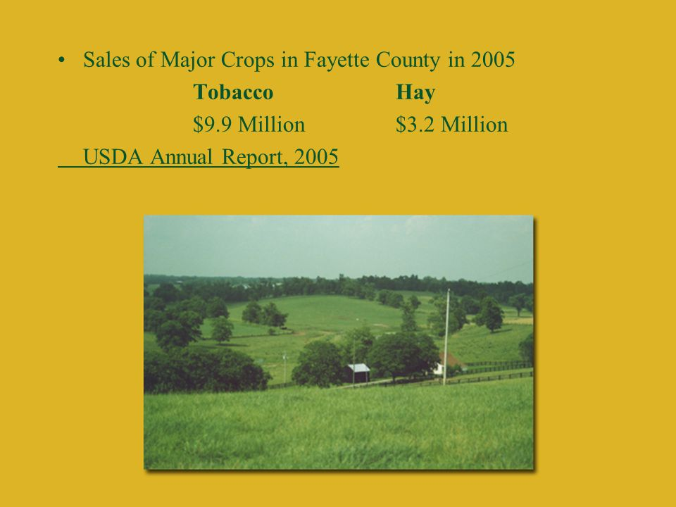 Sales of Major Crops in Fayette County in 2005 TobaccoHay $9.9 Million$3.2 Million USDA Annual Report, 2005
