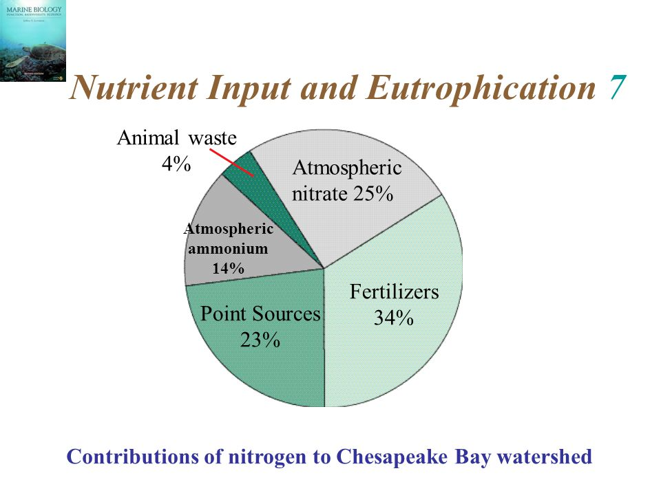 Nutrient Input and Eutrophication 7 Atmospheric nitrate 25% Fertilizers 34% Point Sources 23% Atmospheric ammonium 14% Animal waste 4% Contributions of nitrogen to Chesapeake Bay watershed
