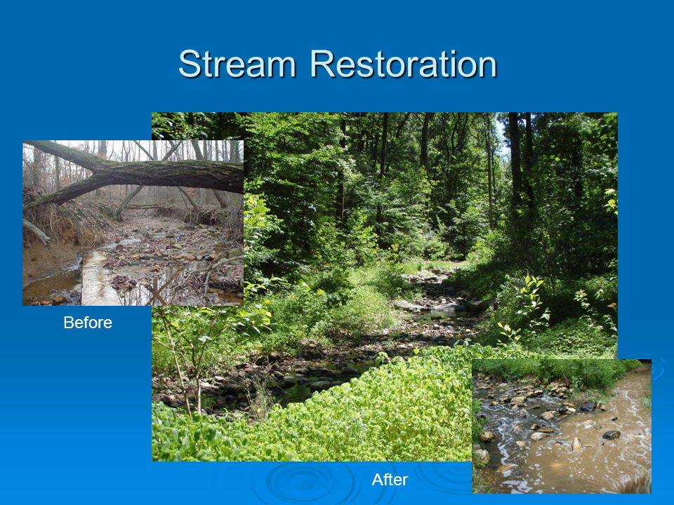 Stream Restoration Before After
