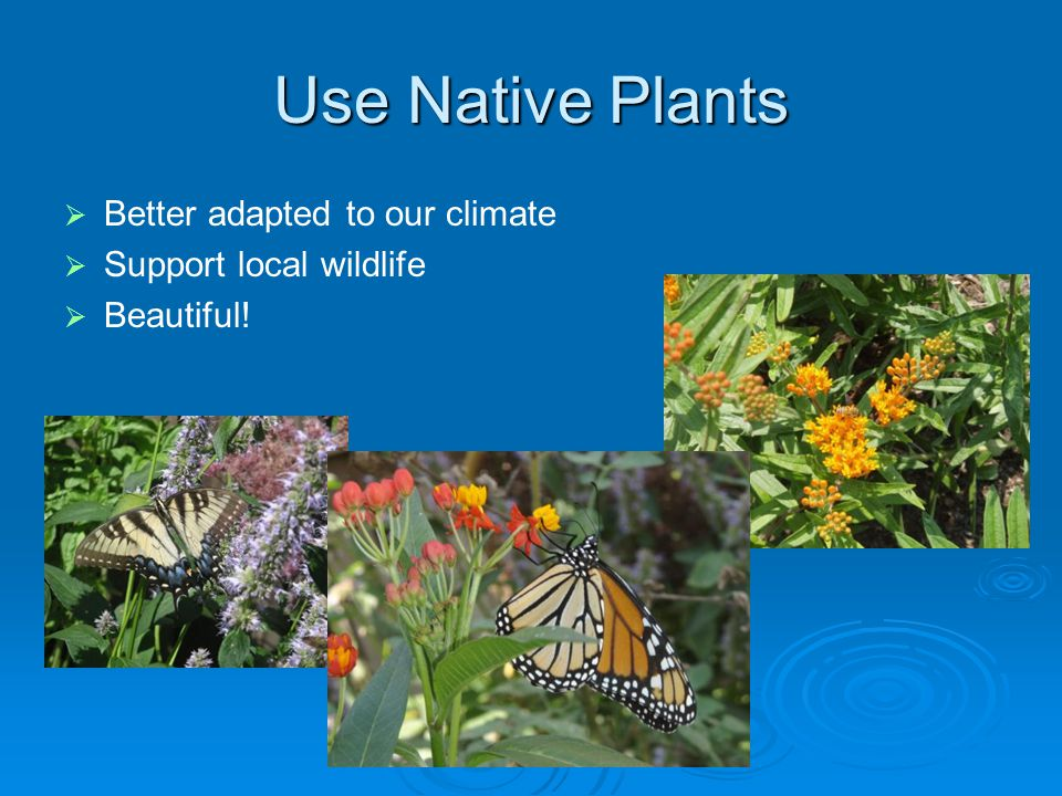 Use Native Plants   Better adapted to our climate   Support local wildlife   Beautiful!
