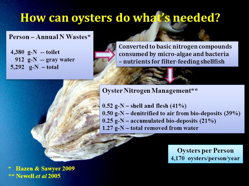 Oyster Nitrogen Management** 0.52 g-N – shell and flesh (41%) 0.50 g-N – denitrified to air from bio-deposits (39%) 0.25 g-N – accumulated bio-deposits (21%) 1.27 g-N – total removed from water Oyster Nitrogen Management** 0.52 g-N – shell and flesh (41%) 0.50 g-N – denitrified to air from bio-deposits (39%) 0.25 g-N – accumulated bio-deposits (21%) 1.27 g-N – total removed from water Person – Annual N Wastes* 4,380 g-N -- toilet 912 g-N -- gray water 5,292 g-N – total Person – Annual N Wastes* 4,380 g-N -- toilet 912 g-N -- gray water 5,292 g-N – total Oysters per Person 4,170 oysters/person/year Oysters per Person 4,170 oysters/person/year * Hazen & Sawyer 2009 ** Newell et al 2005 How can oysters do what's needed.