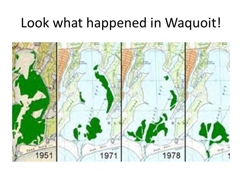 Look what happened in Waquoit!