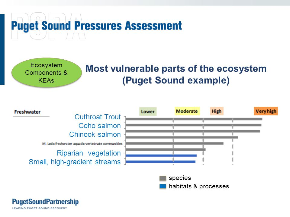 Most vulnerable parts of the ecosystem (Puget Sound example) species habitats & processes Cuthroat Trout Coho salmon Chinook salmon Riparian vegetation Small, high-gradient streams Ecosystem Components & KEAs