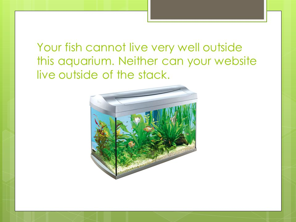 Your fish cannot live very well outside this aquarium.