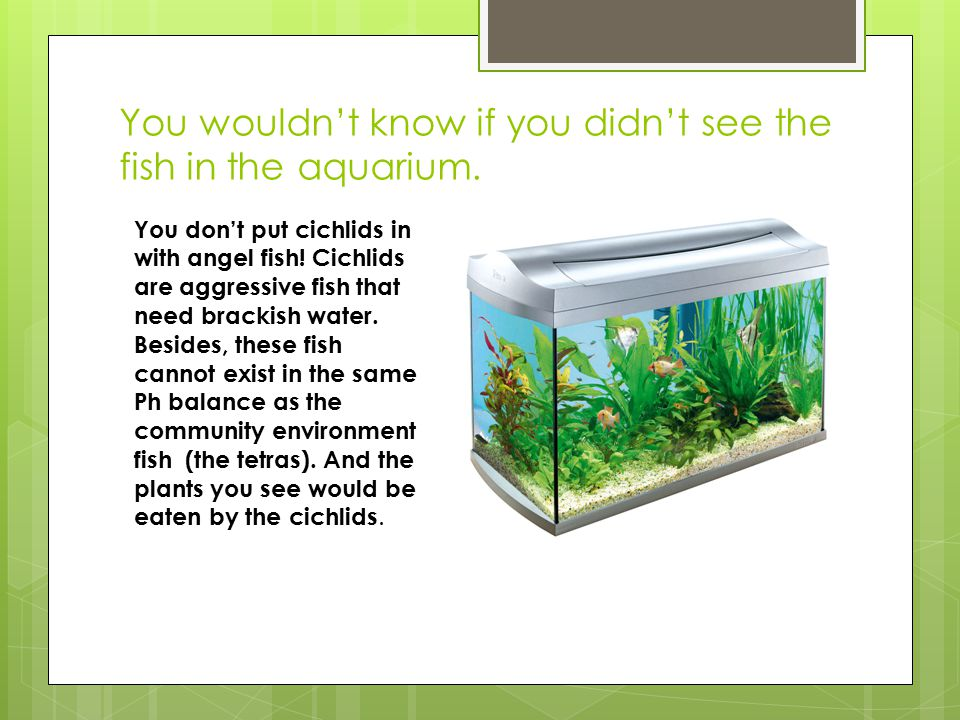 You wouldn't know if you didn't see the fish in the aquarium.