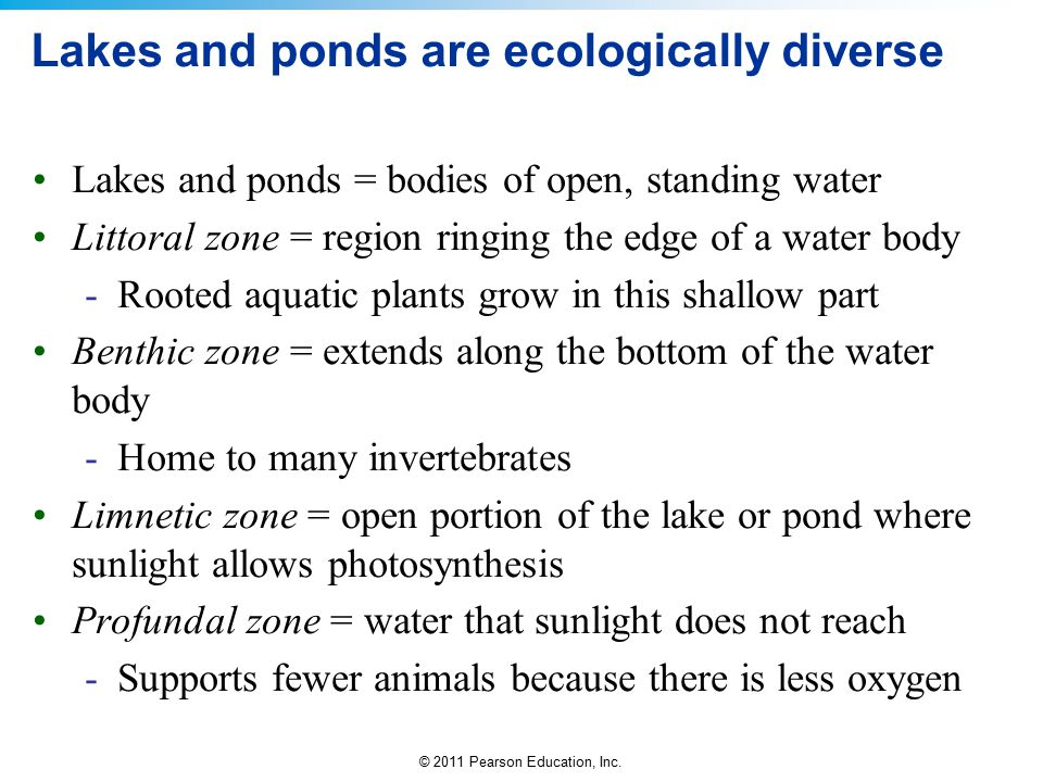© 2011 Pearson Education, Inc. Lakes and ponds are ecologically diverse Lakes and ponds = bodies of open, standing water Littoral zone = region ringin