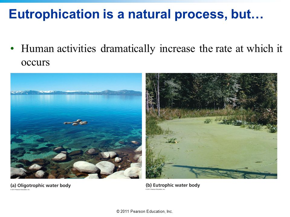 © 2011 Pearson Education, Inc. Eutrophication is a natural process, but… Human activities dramatically increase the rate at which it occurs