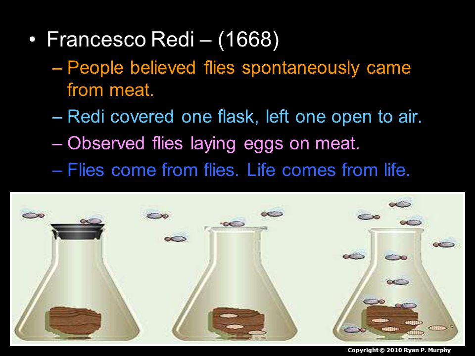 Francesco Redi – (1668) –People believed flies spontaneously came from meat. –Redi covered one flask, left one open to air. –Observed flies laying egg