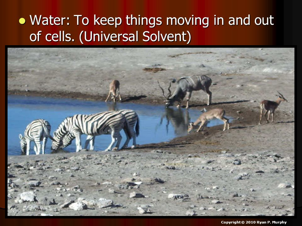 Water: To keep things moving in and out of cells. (Universal Solvent) Water: To keep things moving in and out of cells. (Universal Solvent) Copyright