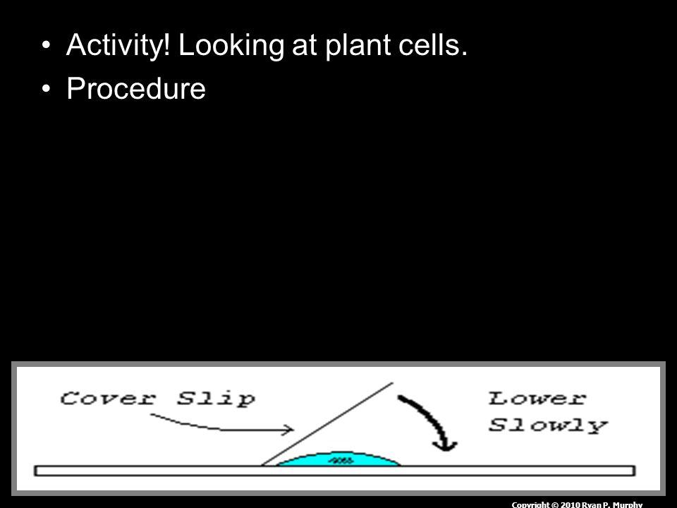 Activity! Looking at plant cells. Procedure Copyright © 2010 Ryan P. Murphy