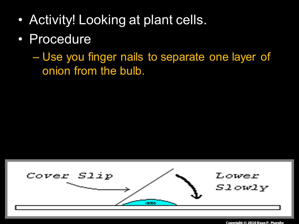 Activity.Looking at plant cells.