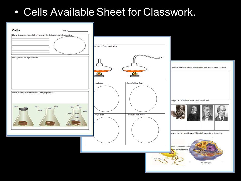 Cells Available Sheet for Classwork.