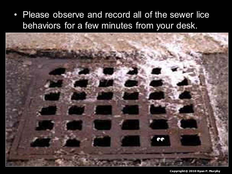 Please observe and record all of the sewer lice behaviors for a few minutes from your desk.