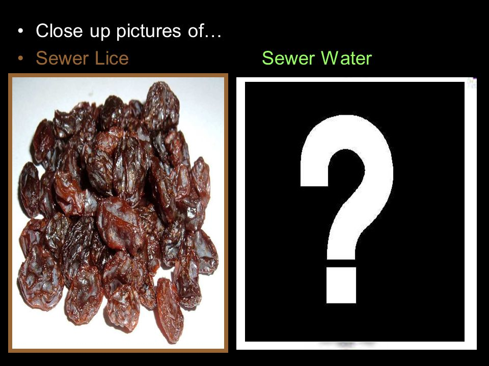 Close up pictures of… Sewer LiceSewer Water
