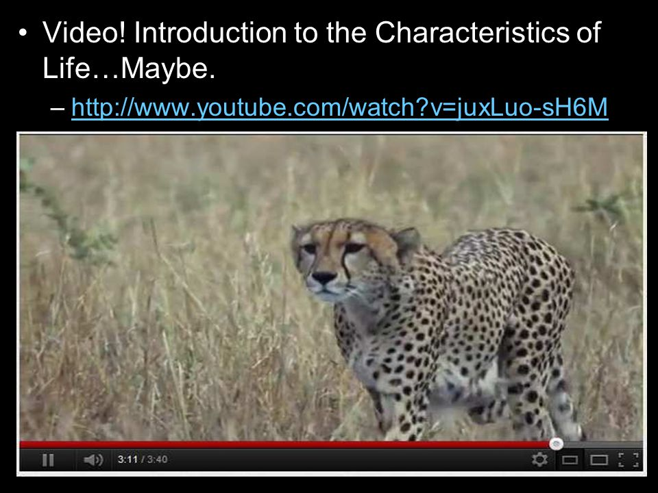 Video. Introduction to the Characteristics of Life…Maybe.