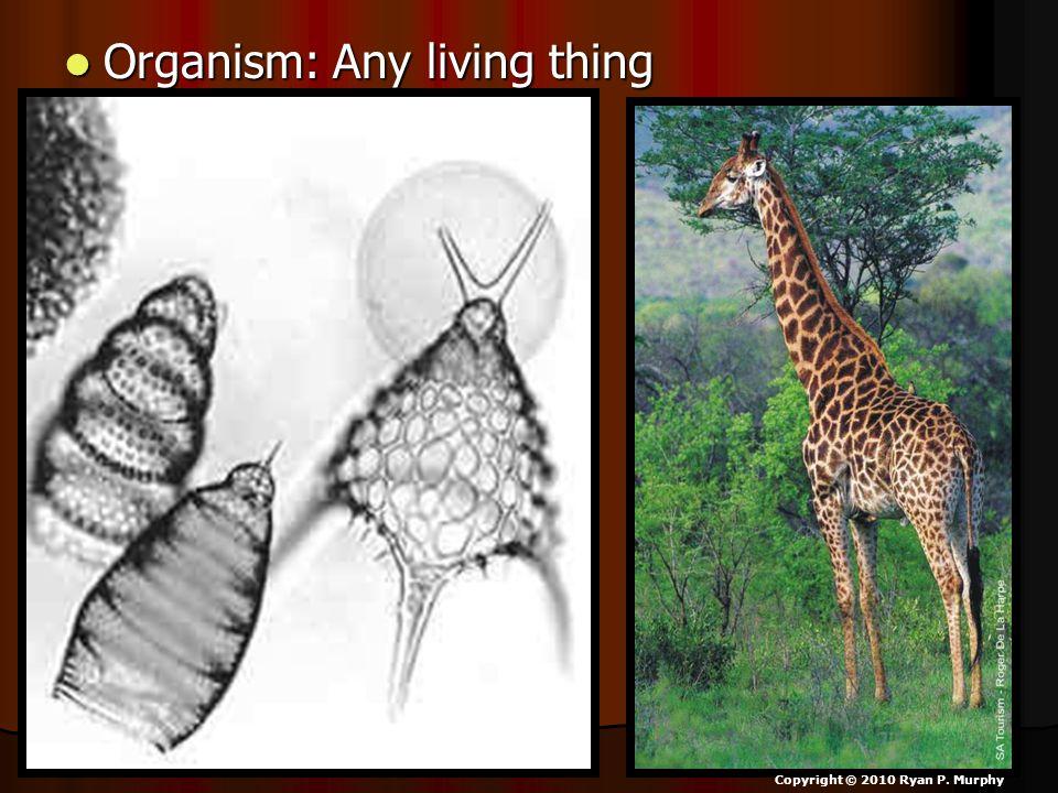 Organism: Any living thing Organism: Any living thing Copyright © 2010 Ryan P. Murphy