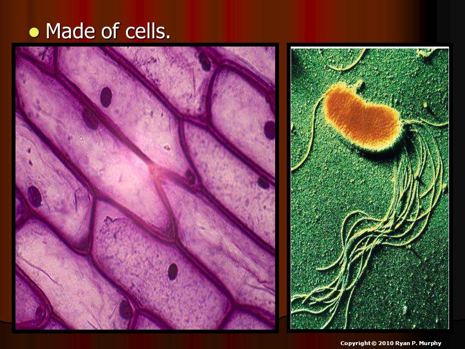 Made of cells. Made of cells. Copyright © 2010 Ryan P. Murphy
