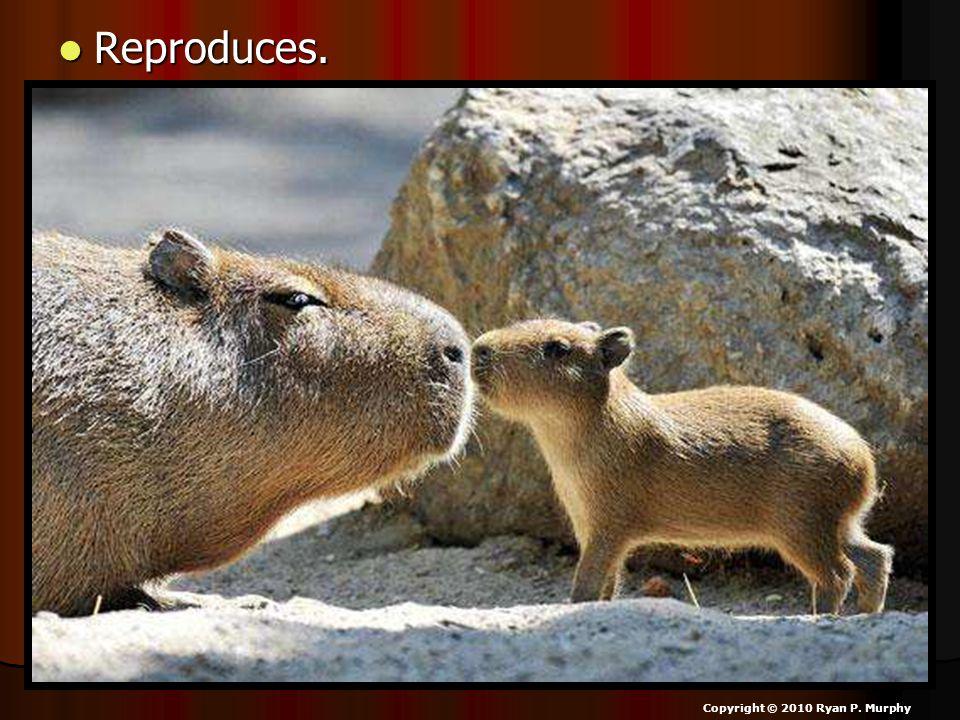 Reproduces. Reproduces. Copyright © 2010 Ryan P. Murphy