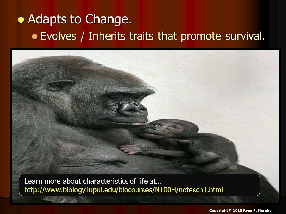 Adapts to Change. Adapts to Change. Evolves / Inherits traits that promote survival.