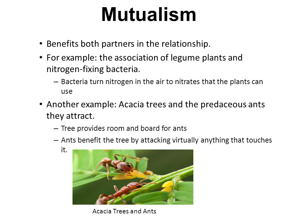 Mutualism Benefits both partners in the relationship. For example: the association of legume plants and nitrogen-fixing bacteria. – Bacteria turn nitr