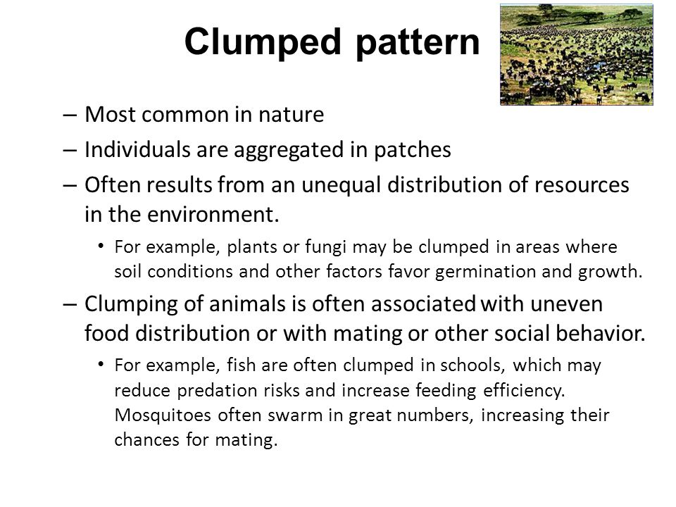 Clumped pattern – Most common in nature – Individuals are aggregated in patches – Often results from an unequal distribution of resources in the envir