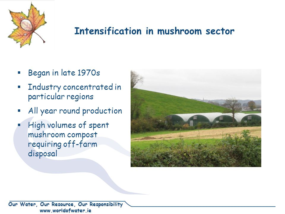 Our Water, Our Resource, Our Responsibility www.worldofwater.ie Intensification in mushroom sector  Began in late 1970s  Industry concentrated in particular regions  All year round production  High volumes of spent mushroom compost requiring off-farm disposal