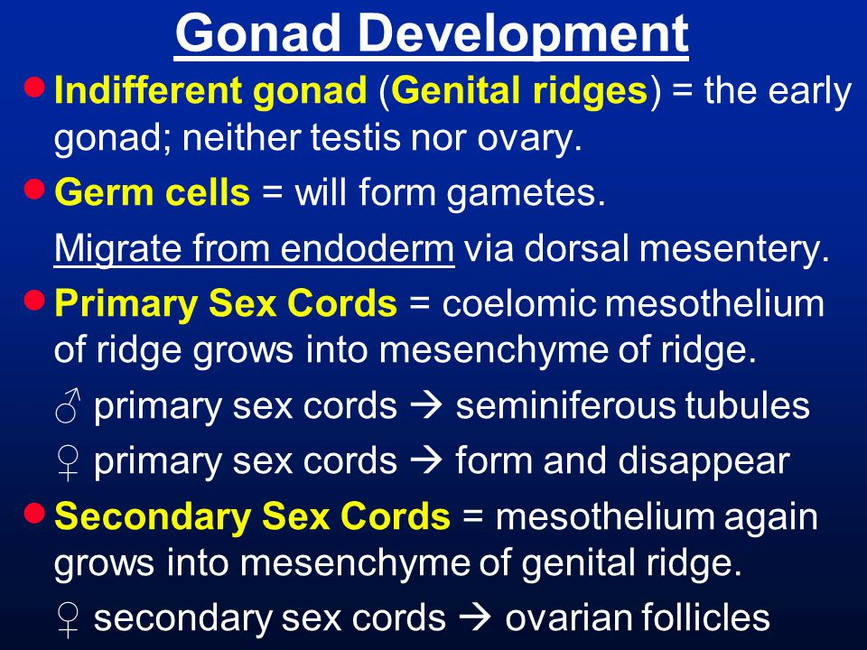  Indifferent gonad (Genital ridges) = the early gonad; neither testis nor ovary.