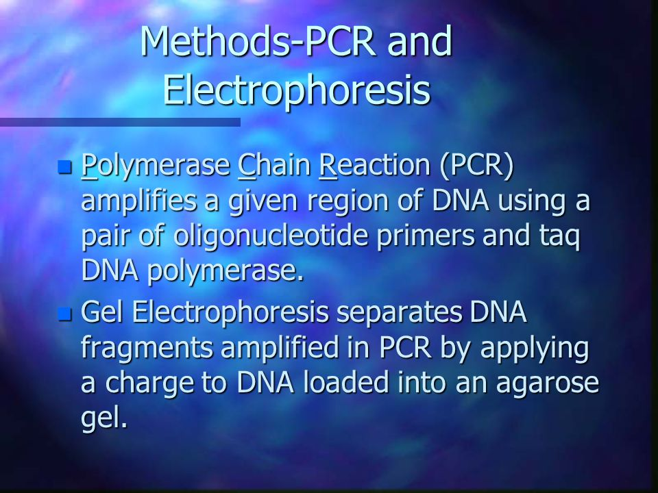 Methods-PCR and Electrophoresis n Polymerase Chain Reaction (PCR) amplifies a given region of DNA using a pair of oligonucleotide primers and taq DNA polymerase.