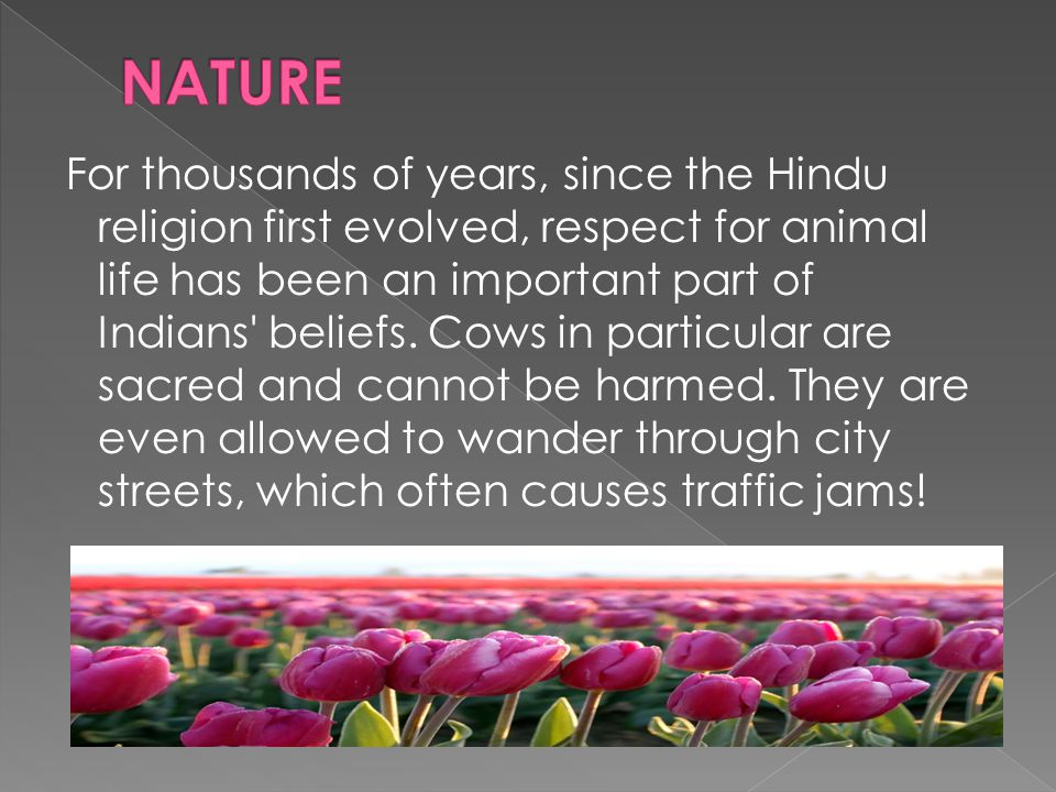 For thousands of years, since the Hindu religion first evolved, respect for animal life has been an important part of Indians beliefs.