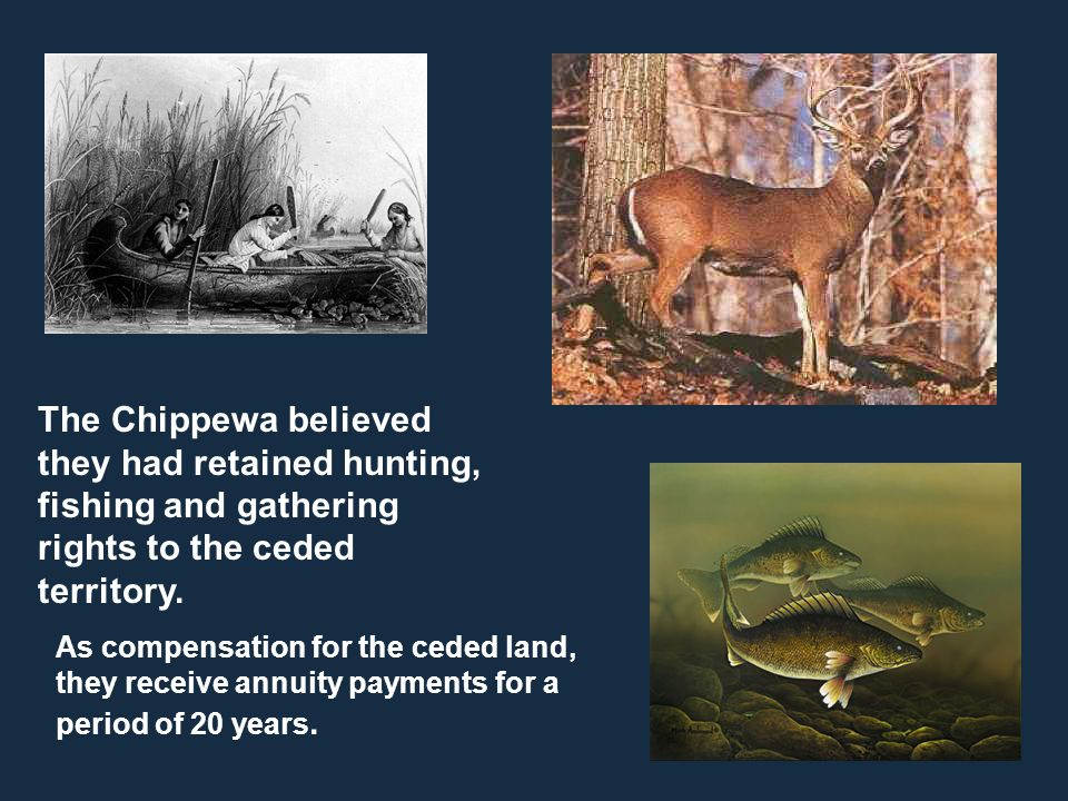 The Chippewa believed they had retained hunting, fishing and gathering rights to the ceded territory. As compensation for the ceded land, they receive
