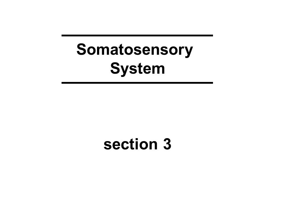 Somatosensory System section 3