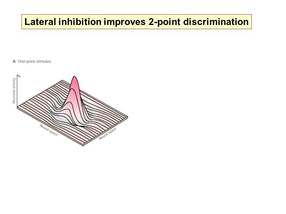 Lateral inhibition improves 2-point discrimination