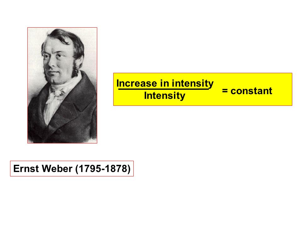 Ernst Weber (1795-1878) Increase in intensity Intensity = constant